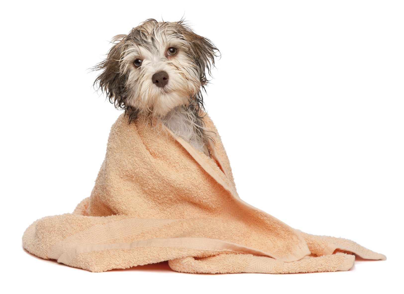 Where To Get Your Dog Groomed